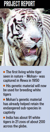 White tigers to get new home in Rewa