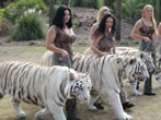 White Tigers and Girls take a walk